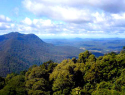 View from the Dorrigo National Park