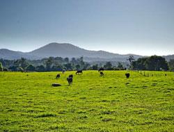Bellingen Farmstay
