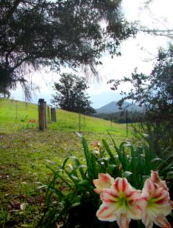 Bellingen Farmstay - Explore the Property