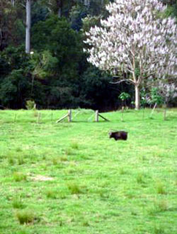 Bellingen Farmstay pasture