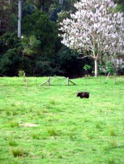 Bellingen Farmstay pasture