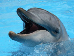 Pet Porpoise Pool, Coffs Harbour