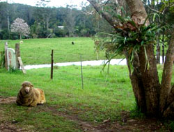 Bellingen Farmstay is a working farm
